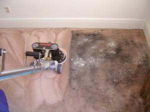 Carpet Companies Houston Tx