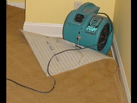 Carpet cleaning water damage