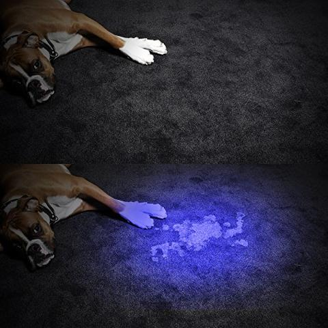 Pet Stain And Odor Removal - Houston TX
